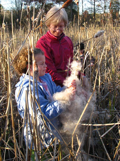 Cattails11-08b