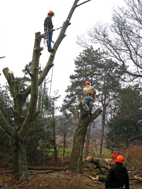 Treework11-08