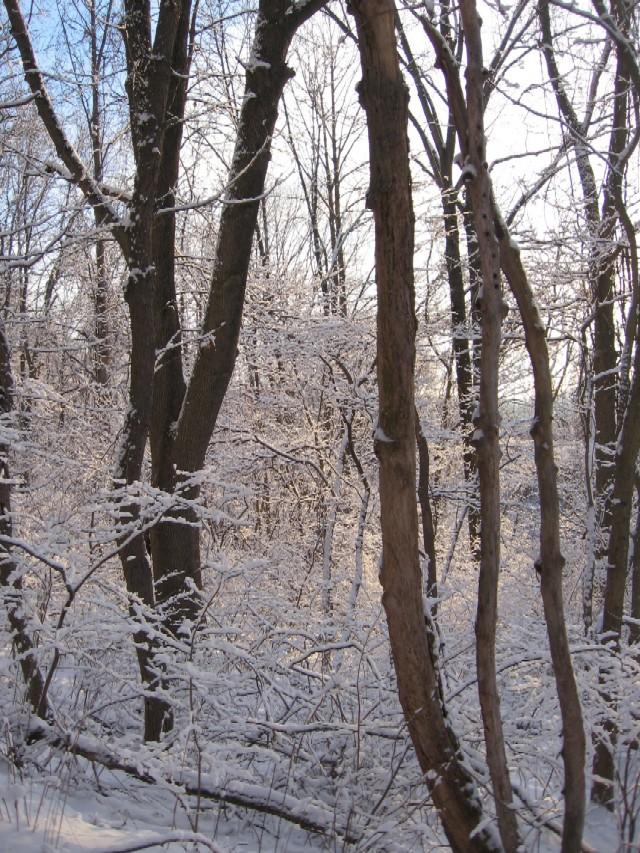 Snow 2.04 004