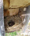 BLUEBIRD 04.29.09 003