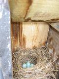 BLUE BIRD 4.14.09