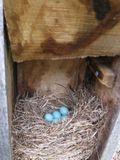 BLUE BIRD 5.06.09 005