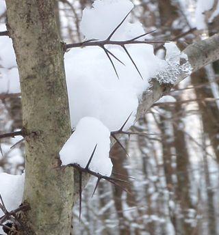 SNOW ART 017