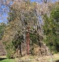 TREE WORK.09 004