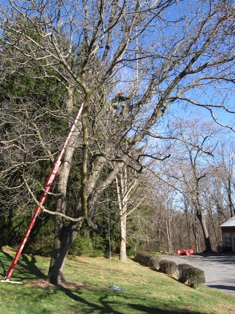TREE WORK.09 007