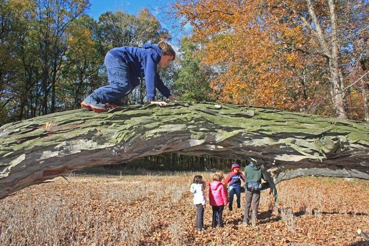 Climbing fallen tree