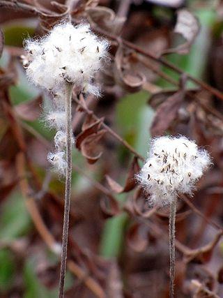 MEBUS FlowersGoneToSeedMaritonFields1123-10