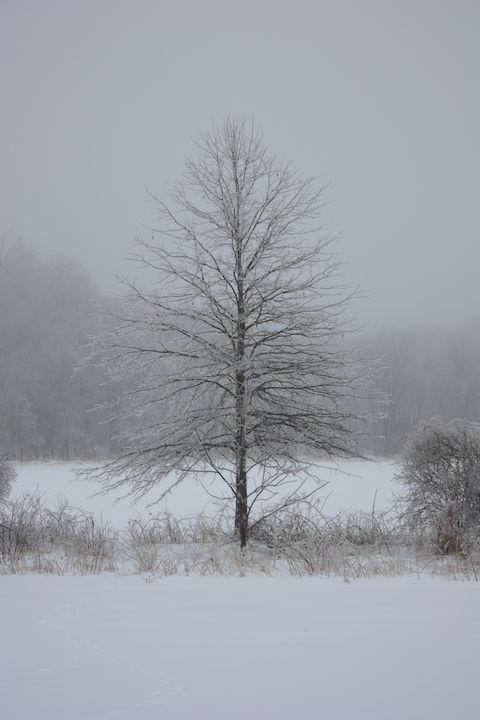 Snow scene (2)
