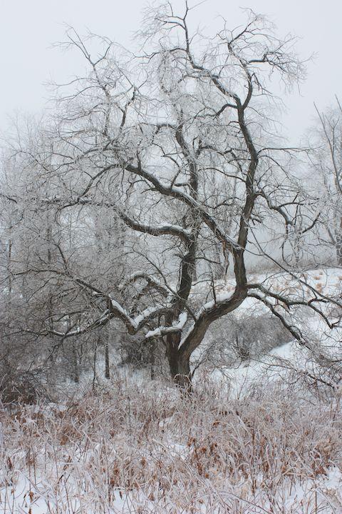 Winter storm (1)