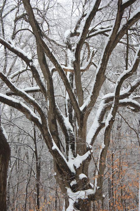 Winter storm (2)