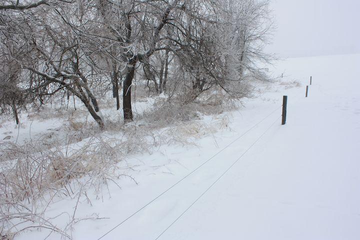 Snow scene (3)