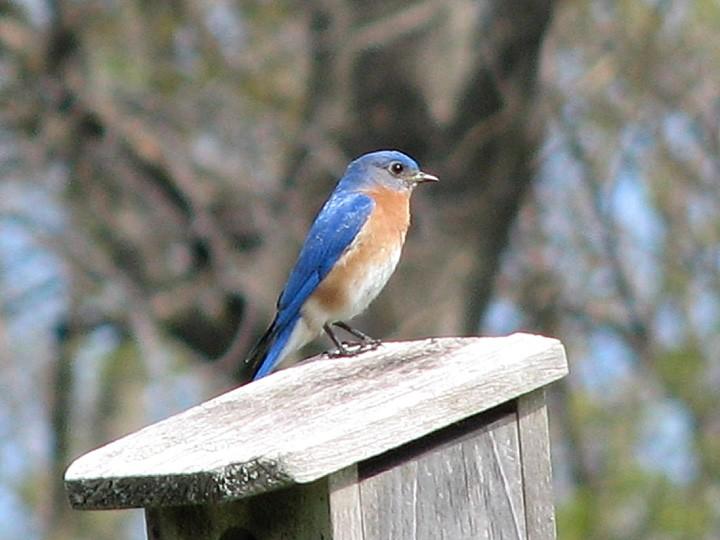 MEBUS BluebirdOnBox