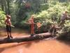 Log_in_creek