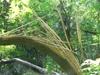 Split_tree_1