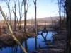 Wetland_1