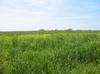 Gwynedd_meadow
