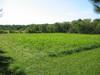 Gwynedd_meadow2