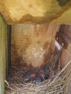 Copy_of_nest_box_071806
