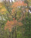 Fall_color_001