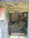 Nest_box_510_ii_1