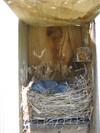 Nest_box_510_viii