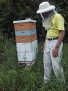 Beekeeping_1