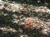 Coral_fungi4