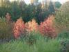 Glades_5