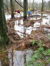 Kidsinswamp