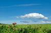 Gwynedd_meadow_2