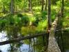 Wetlandlog