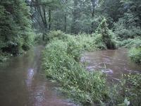 Creektrailwet