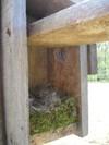 Nest_50108_001