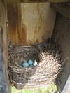Nest_50108_003