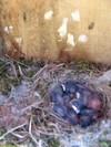 Nest_box_52808_004