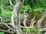 Skeletontree