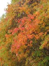 Fall_color_101408_003